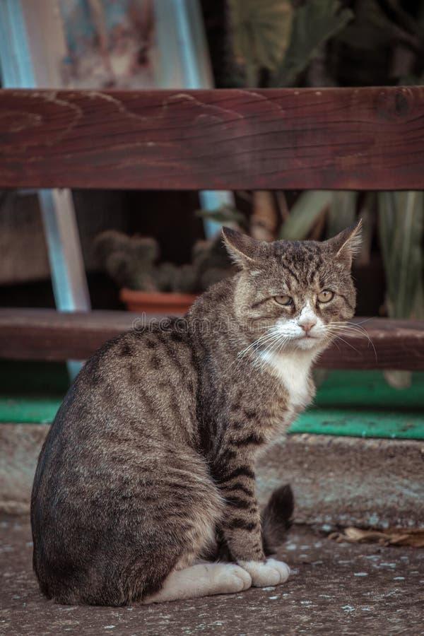 O gato colorido grande está sentando-se na jarda imagem de stock royalty free