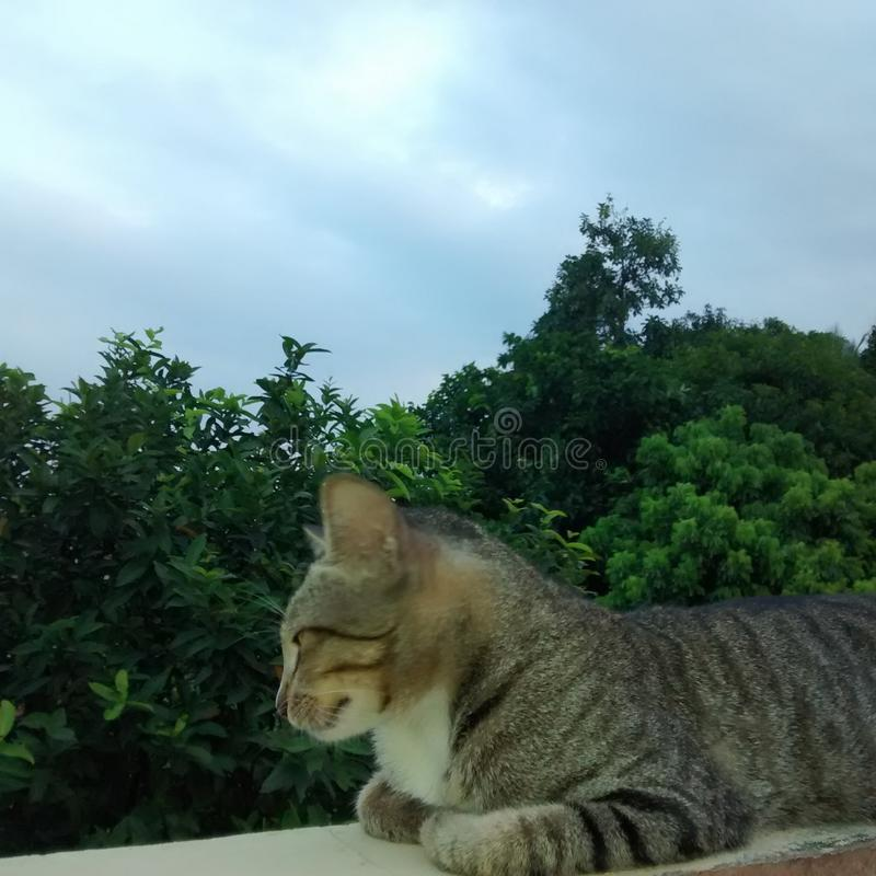 O gato da manhã foto de stock royalty free