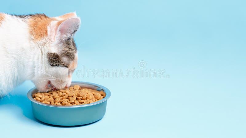 O gato de Cory é apetitoso come de uma placa em um backgroun azul fotos de stock