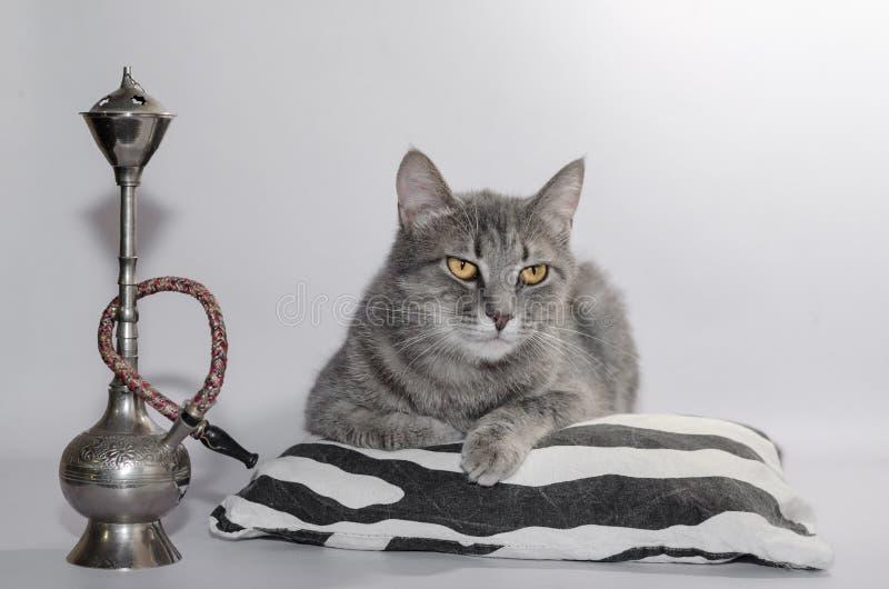 O gato de gato malhado cinzento encontra-se em um descanso listrado ao lado do cachimbo de água da lembrança imagem de stock royalty free