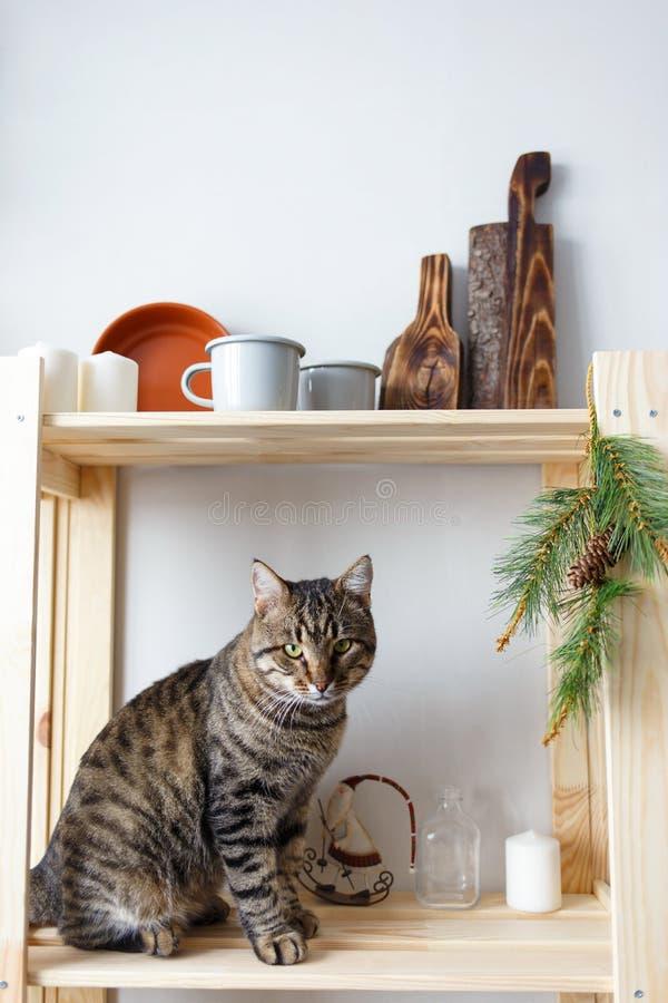 O gato de gato malhado senta-se na cremalheira da cozinha com pratos e as lembranças do Natal copiam o espaço fotos de stock royalty free