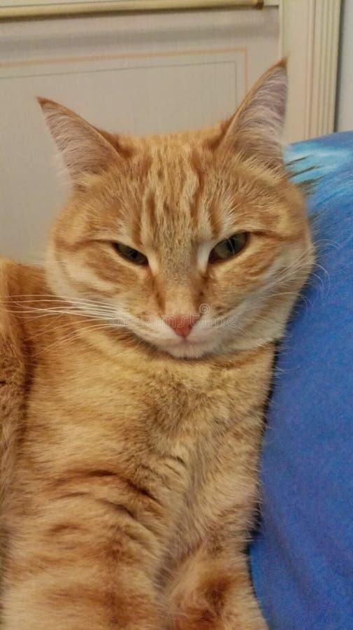 O gato de meus vizinhos fotografia de stock royalty free