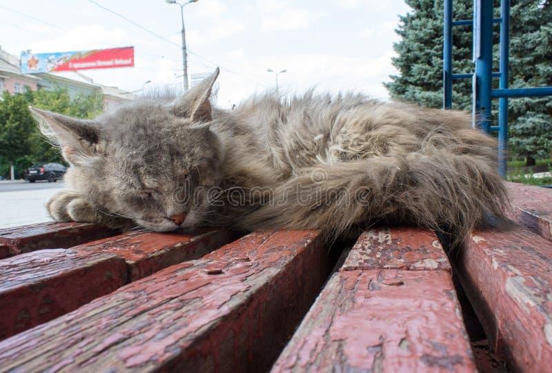 O gato desabrigado dorme em uma parada do ônibus foto de stock
