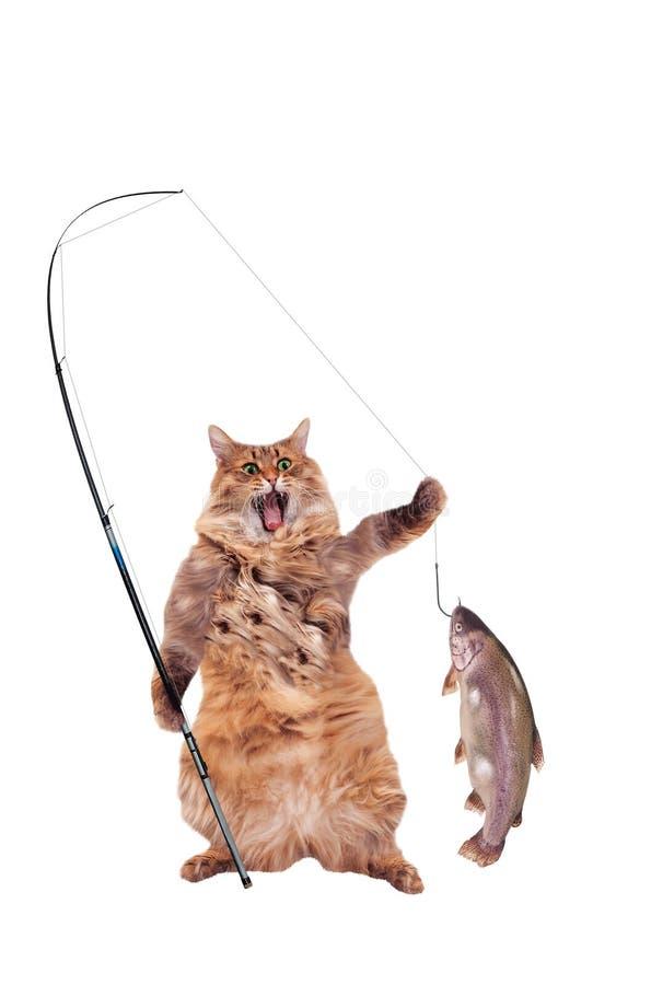 O gato desgrenhado grande é posição muito engraçada, fotos de stock royalty free