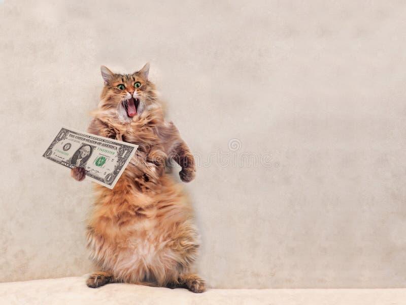 O gato desgrenhado grande é posição muito engraçada abrigo 8 fotografia de stock royalty free