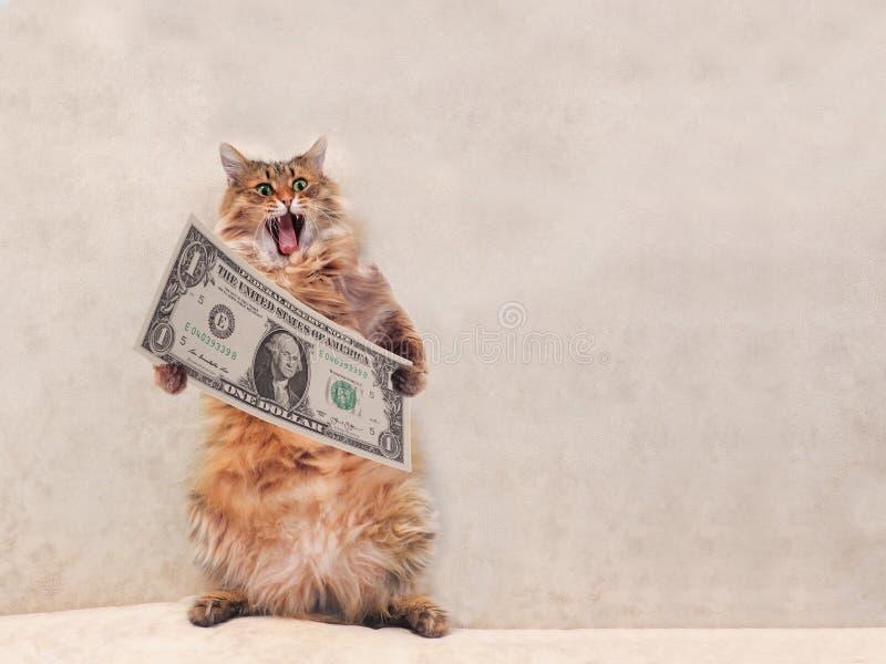 O gato desgrenhado grande é posição muito engraçada abrigo 4 fotos de stock