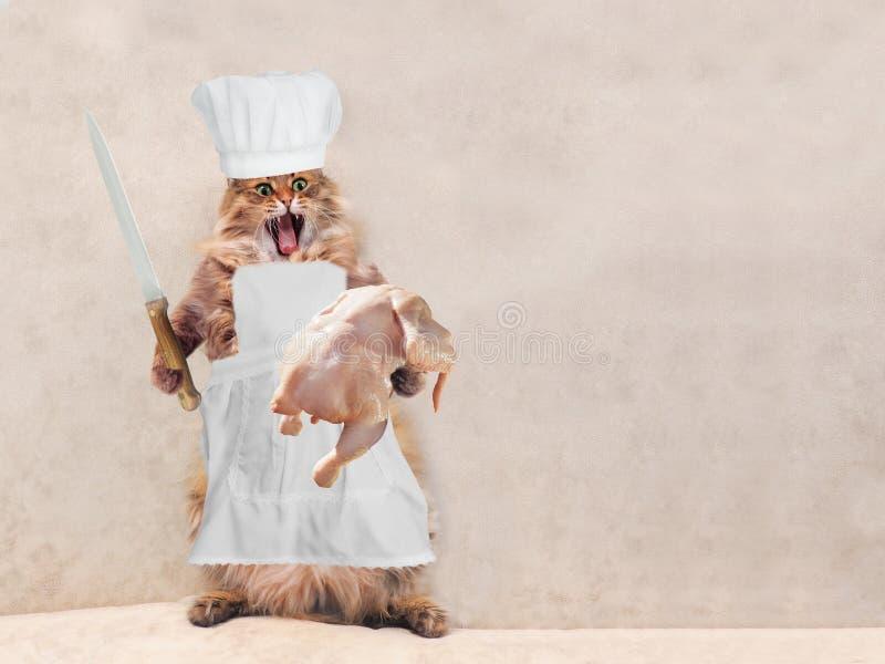 O gato desgrenhado grande é posição muito engraçada, cozinheiro 13 foto de stock