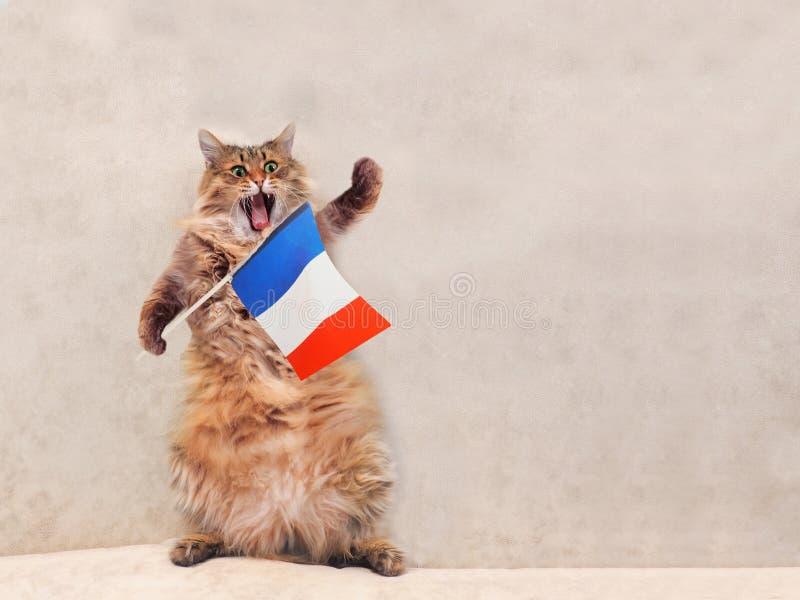 O gato desgrenhado grande é posição muito engraçada França, bandeira 6 imagens de stock royalty free