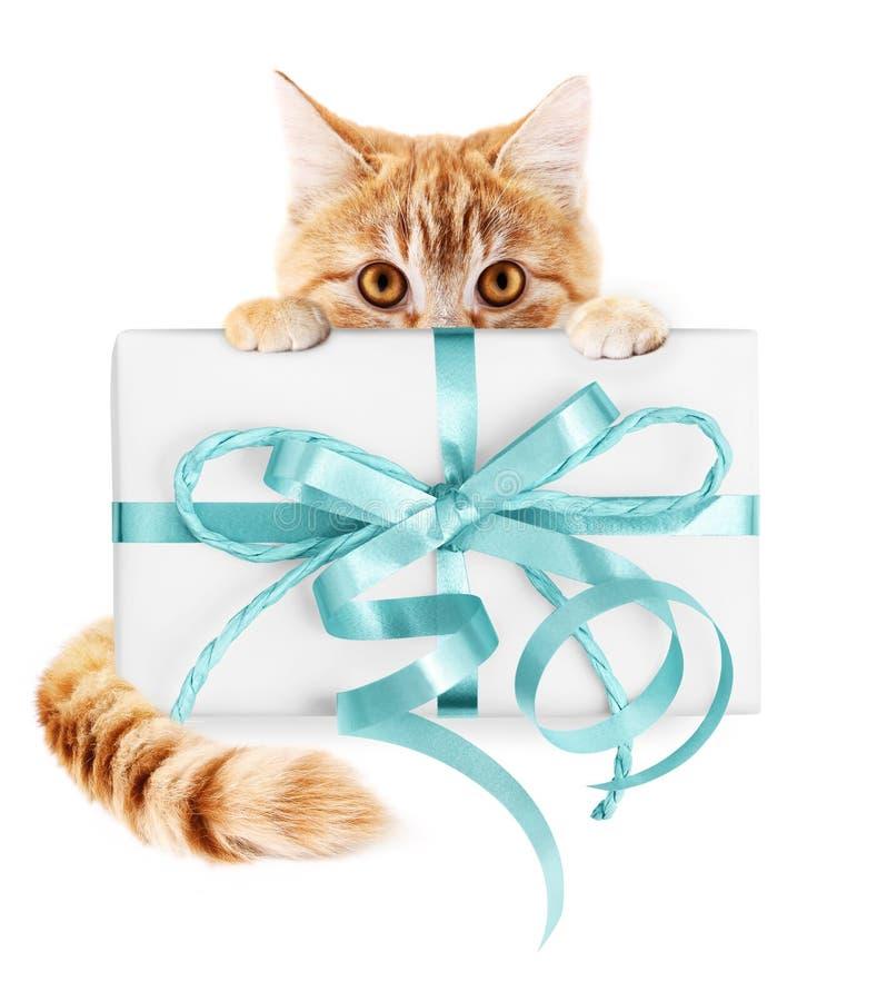 O gato do gengibre e o pacote do presente com fita azul curvam-se, isolado no wh foto de stock royalty free