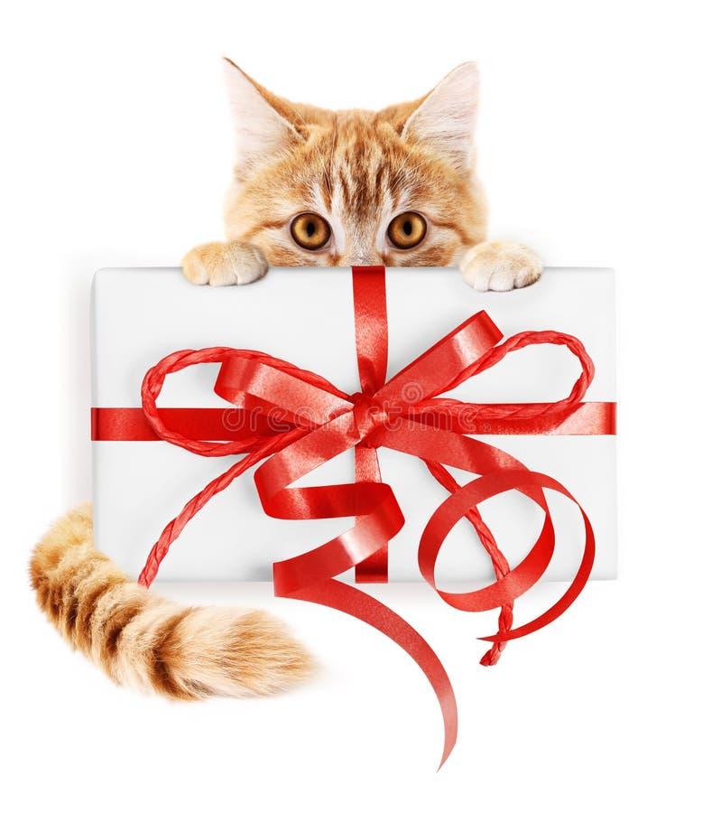 O gato do gengibre e o pacote do presente do Natal com fita vermelha curvam-se, isola fotos de stock royalty free