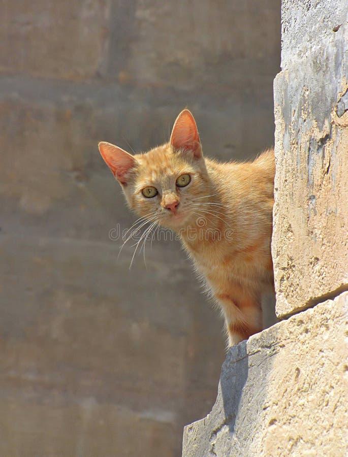 O gato do gengibre espreita ao virar da esquina imagem de stock royalty free