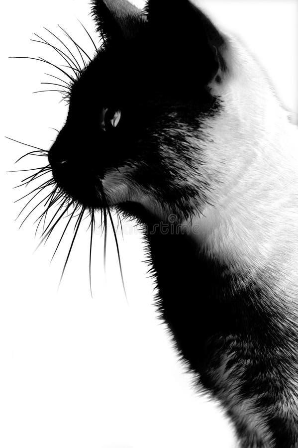 O gato do inferno fotografia de stock royalty free
