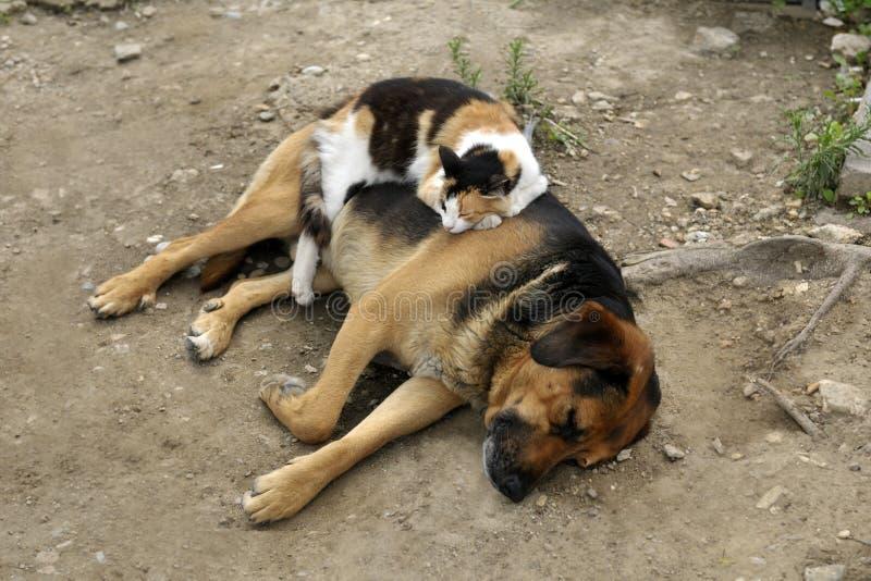 O gato dorme em um cão fora imagens de stock royalty free