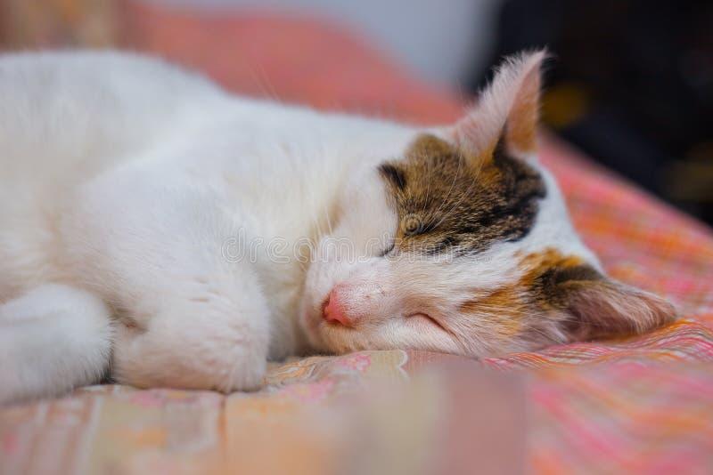 O gato dorme na cama foto de stock