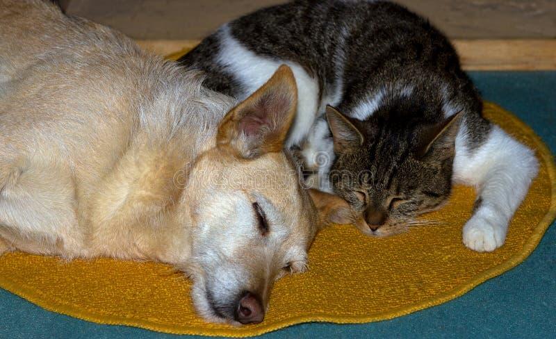 O gato e o cão estão dormindo junto no assoalho imagens de stock royalty free