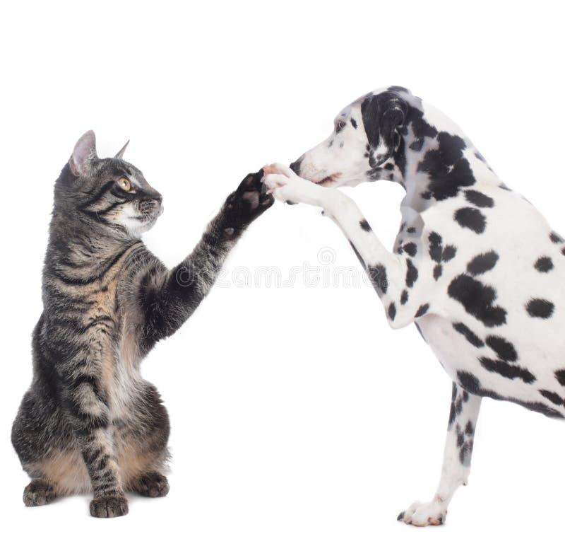 O gato e o cão dão a elevação cinco fotografia de stock