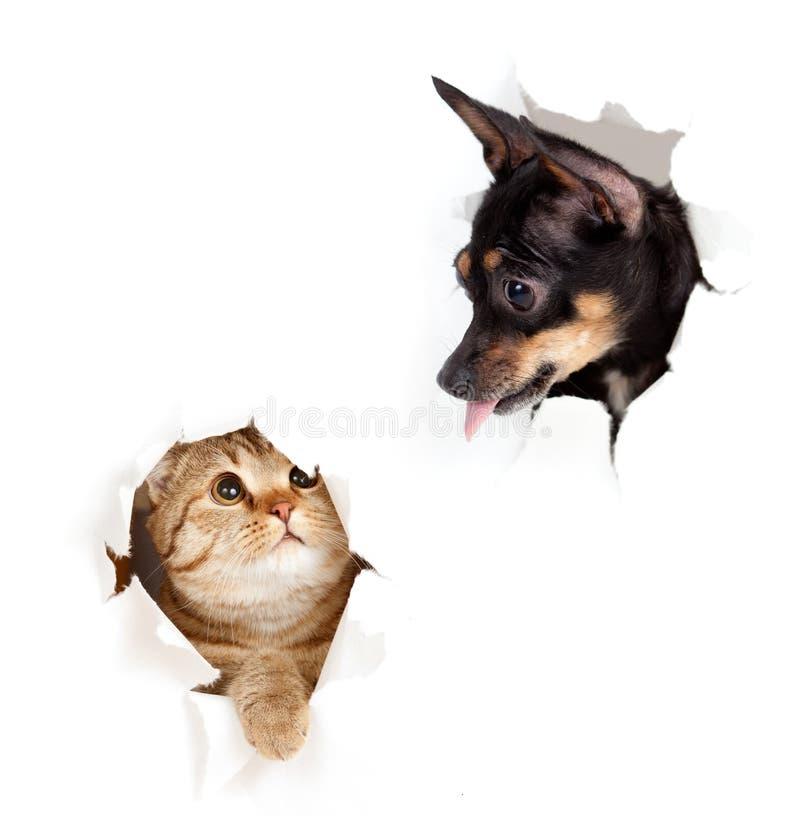 O gato e o cão o lado de papel no furo rasgado isolaram-se imagem de stock royalty free