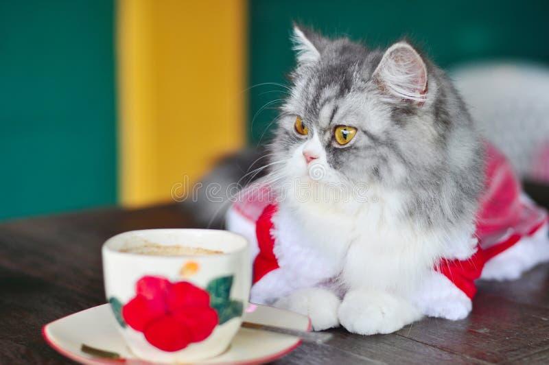 O gato e o café imagens de stock royalty free