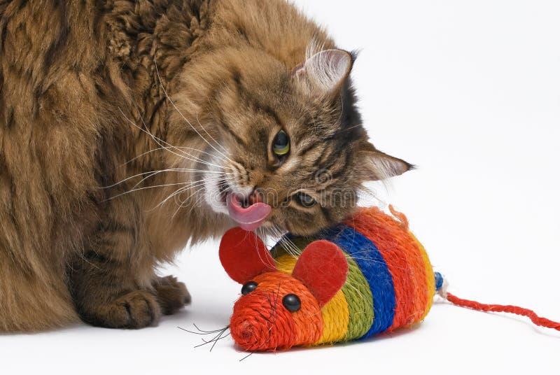 O gato e o rato no fundo branco foto de stock
