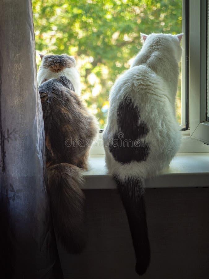 O gato e o gato que sentam-se nas partes traseiras da soleira na sala e para olhar para fora fotos de stock