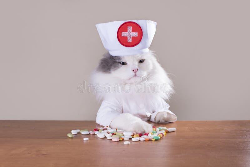 O gato em um terno do doutor dá a medicina imagens de stock