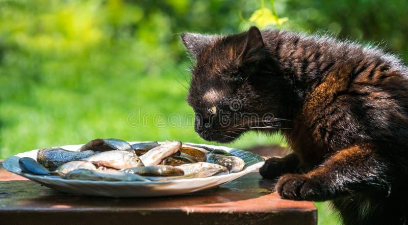 O gato engraçado com fome rouba dos peixes frescos da placa imagens de stock