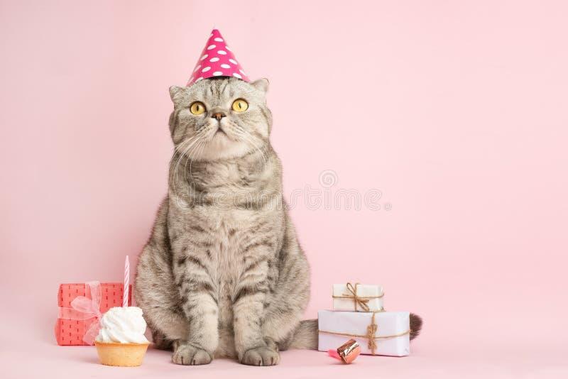 O gato engraçado em um tampão comemora o aniversário, em um fundo cor-de-rosa fotos de stock