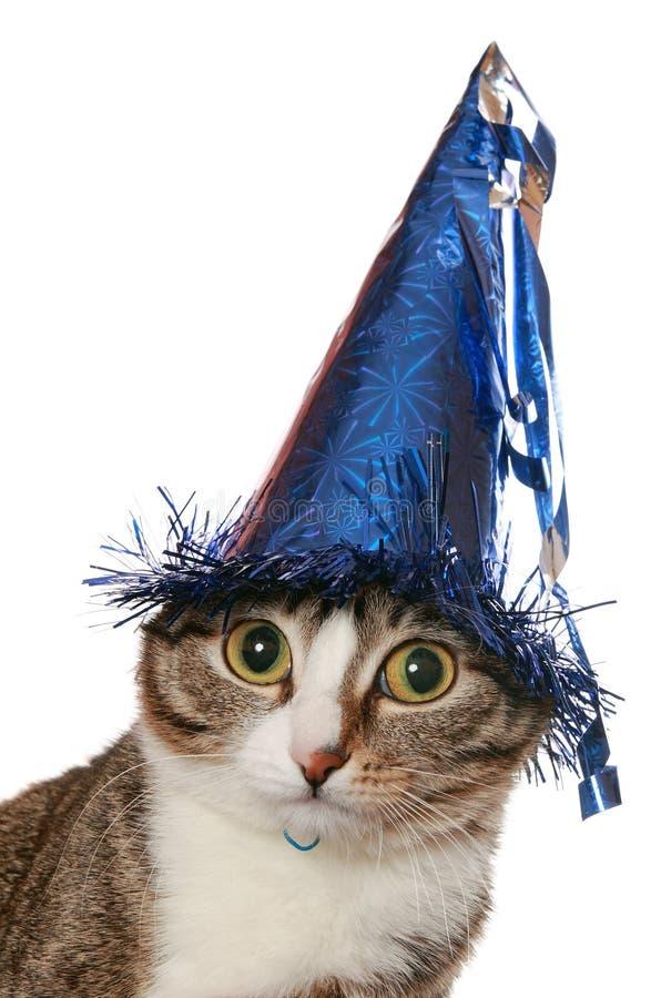 O gato engraçado está em um chapéu festivo fotos de stock royalty free