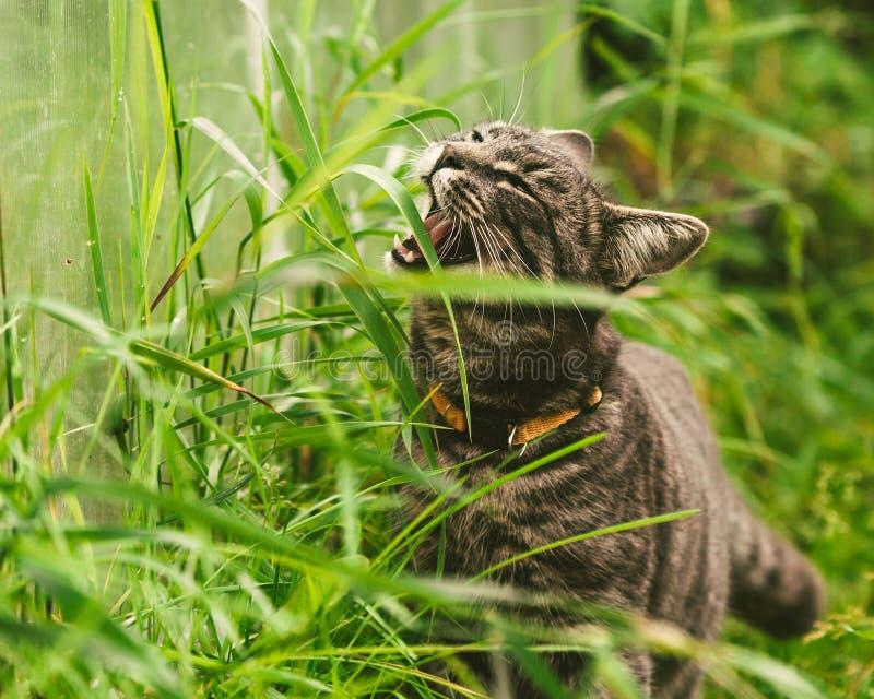 O gato está comendo a grama no parque imagens de stock