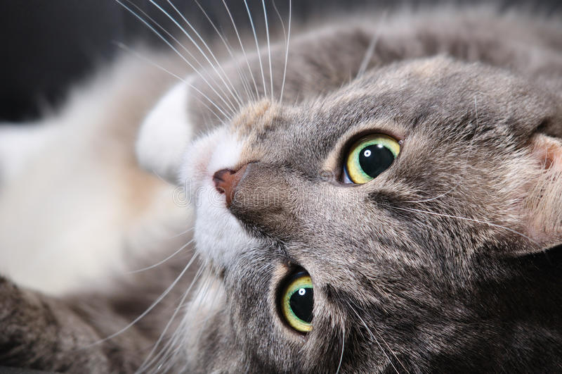 Download O Gato Está Encontrando-se Em Uma Cadeira Imagem de Stock - Imagem de casa, cabelo: 16867775