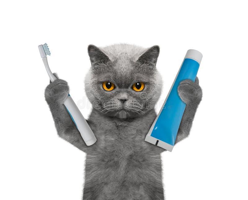 O gato está indo limpar os dentes fotografia de stock royalty free