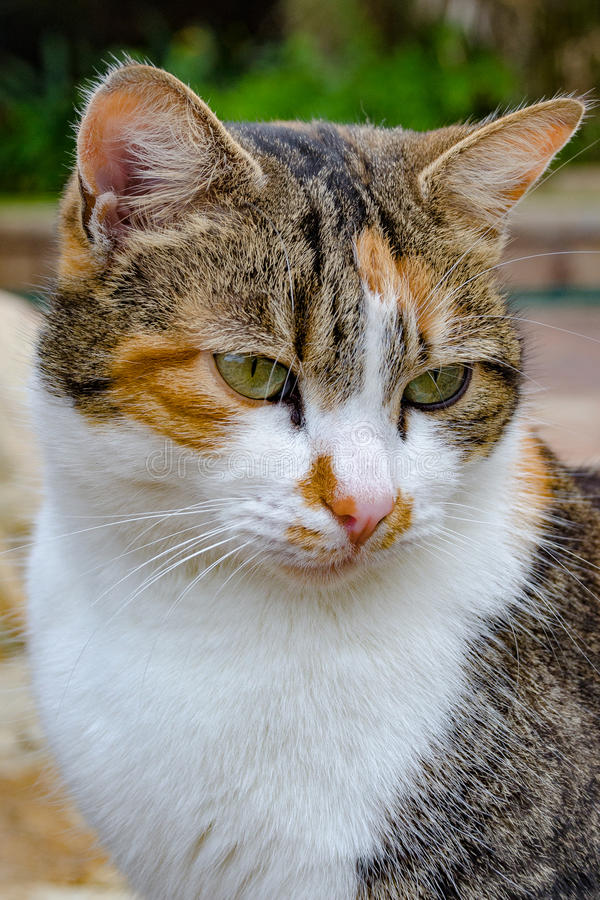 O gato está prestando atenção imagens de stock