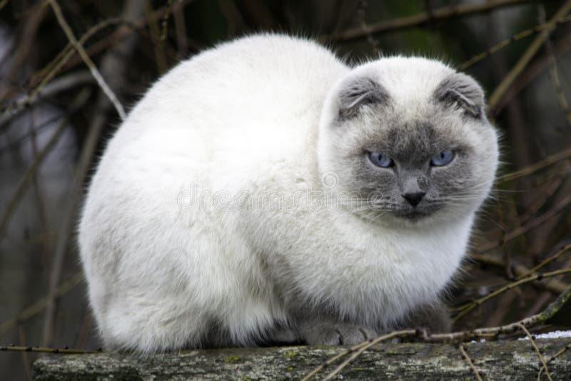 O gato está sentando-se no telhado fotografia de stock royalty free