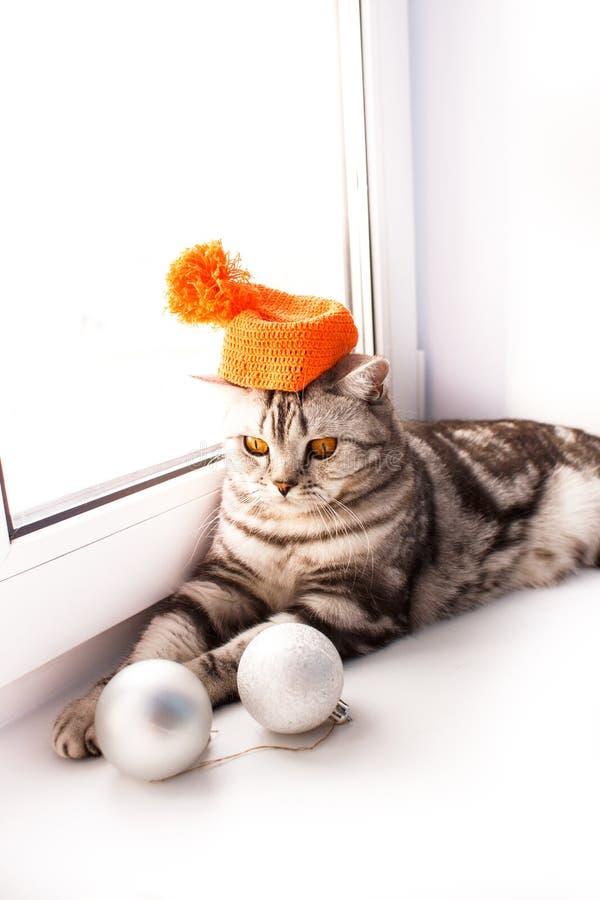 O gato est? encontrando-se em um peitoril branco da janela fotos de stock royalty free