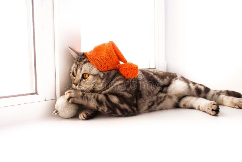 O gato est? encontrando-se em um peitoril branco da janela imagens de stock royalty free