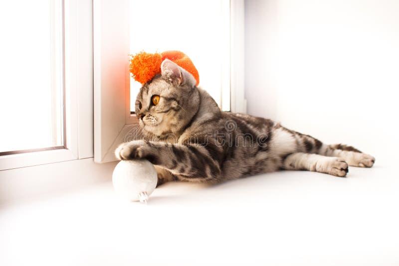 O gato est? encontrando-se em um peitoril branco da janela imagem de stock