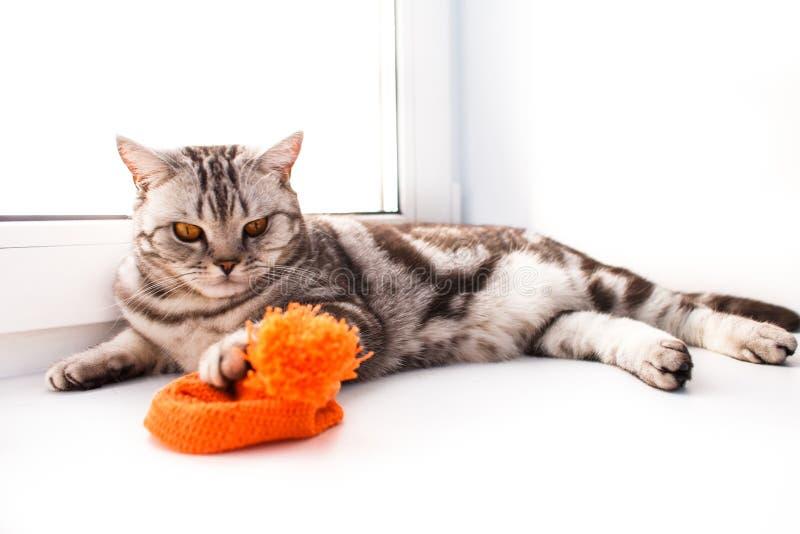 O gato est? encontrando-se em um peitoril branco da janela fotos de stock