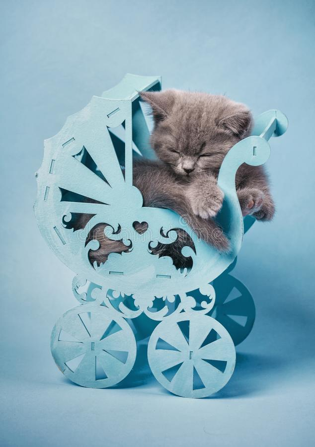 O gato estabeleceu convenientemente no berço fotos de stock