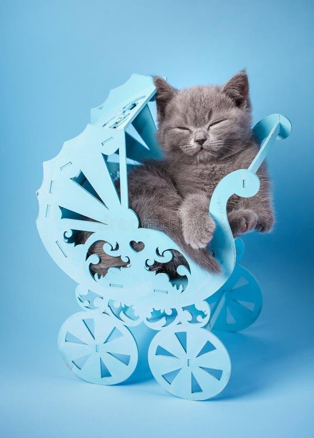O gato estabeleceu convenientemente no berço imagens de stock royalty free