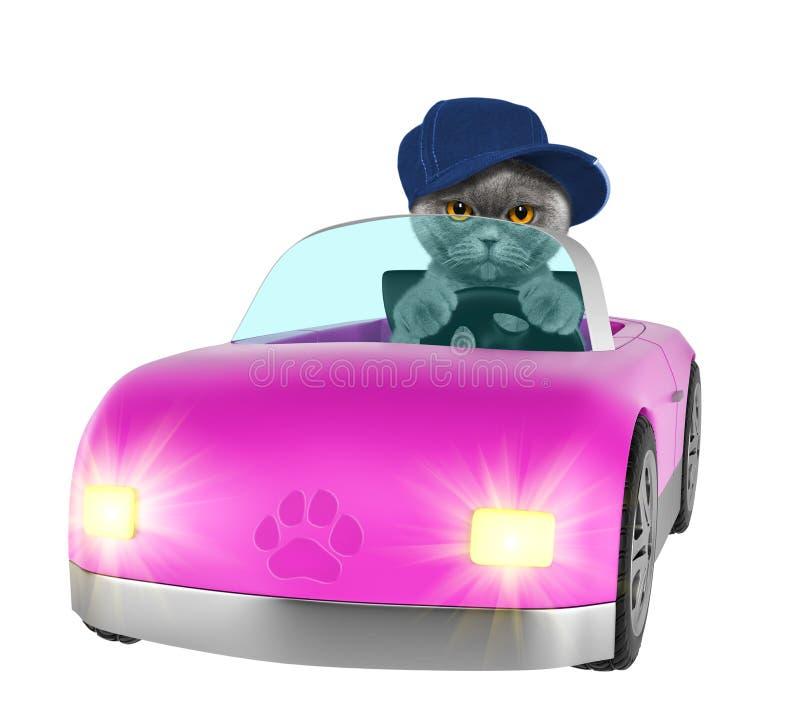O gato feliz aprecia o passeio em um carro Isolado no branco imagem de stock royalty free