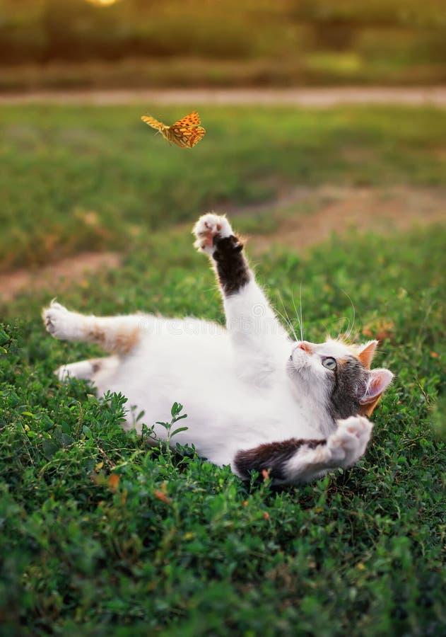 O gato gordo branco engraçado encontra-se em um prado ensolarado do verão e trava-se uma borboleta alaranjada de voo com sua pata foto de stock royalty free