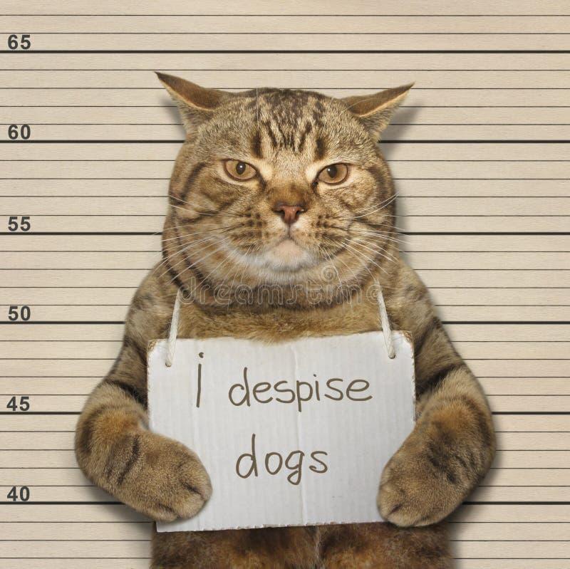 O gato grande despreza cães imagens de stock