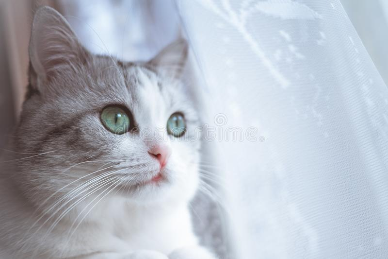 O gato listrado cinzento bonito come a opinião superior do alimento seco foto de stock royalty free