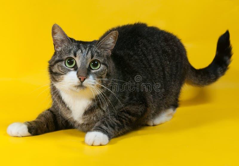 O gato listrado grosso encontra-se no amarelo foto de stock royalty free