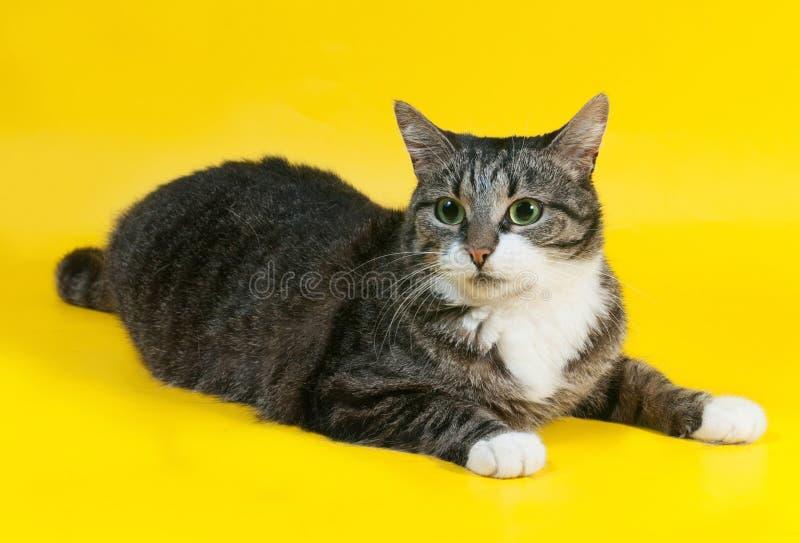 O gato listrado grosso encontra-se no amarelo imagem de stock royalty free