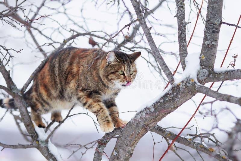 o gato listrado senta-se altamente em um jardim e em olhares do ramo de árvore na primavera na distância imagem de stock