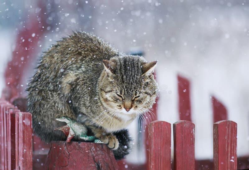 O gato listrado textured retrato da rua senta-se em um dur de madeira da cerca imagens de stock