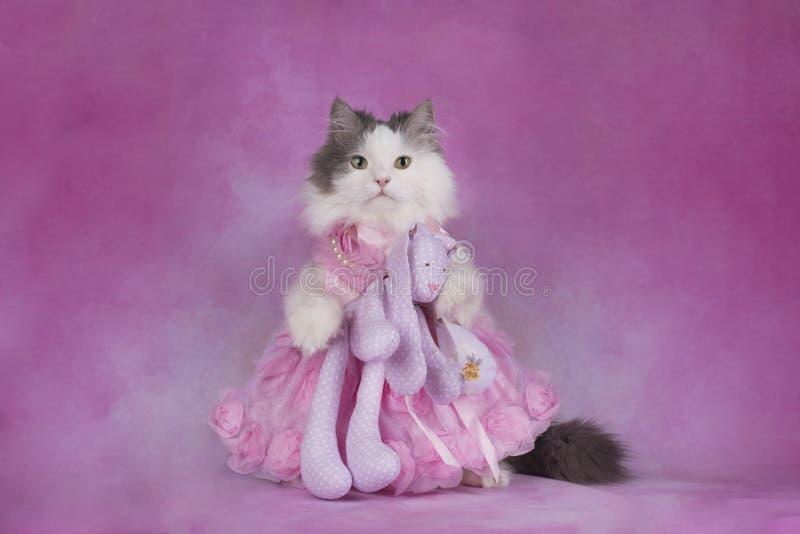 O gato macio em um vestido cor-de-rosa guarda um brinquedo favorito fotografia de stock royalty free