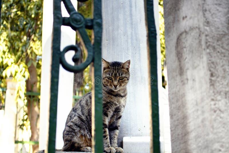 O gato malhado bonito/listrou o gato disperso fotos de stock royalty free