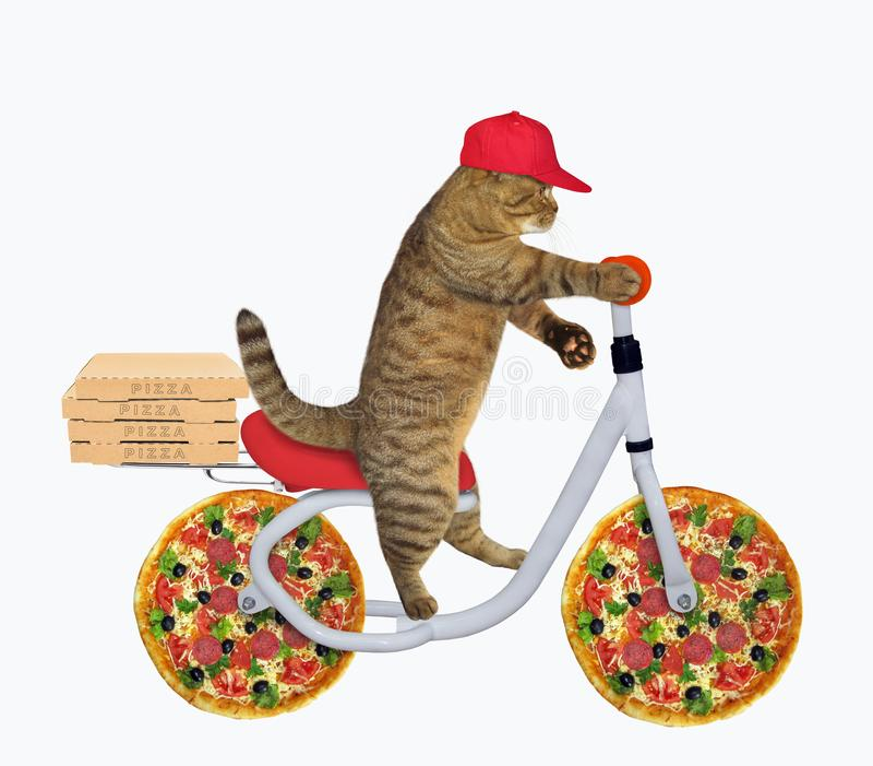 O gato monta uma bicicleta da pizza fotos de stock